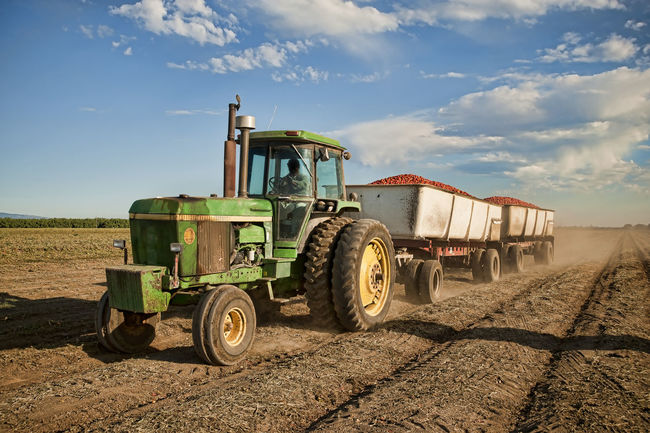 Harvesting tomatos Agriculture Crop  Delivery Food Dirt Driving Earth Equipment Farming Vehicles Full Load Harvesting Horizontal Composition Land Mode Of Transport Moving No People Outdoors Sky Soil On The Ground Tomatos Tractor Tractor