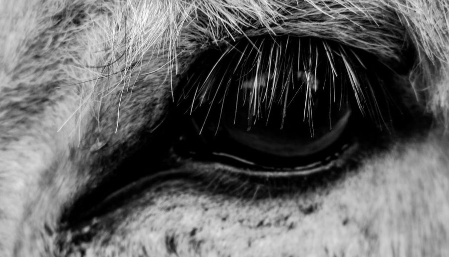 Eye of a Donkey! Bw_collection Macro_collection Macroclique EyeEm Nature Lover