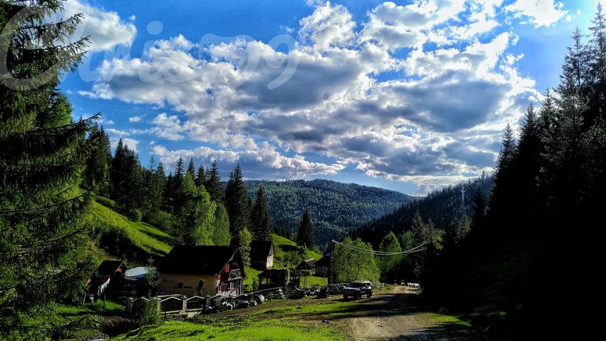 Blue Sky Mountain View White Clouds Pasture Landscape Animal Wildlife Mountain Tree Sky Outdoors Green Color Mountain Range Harghita Romania Tree Beauty In Nature Nature No People Scenics Day Freshness Tranquility Landscape Beauty In Nature Blooming Freshness
