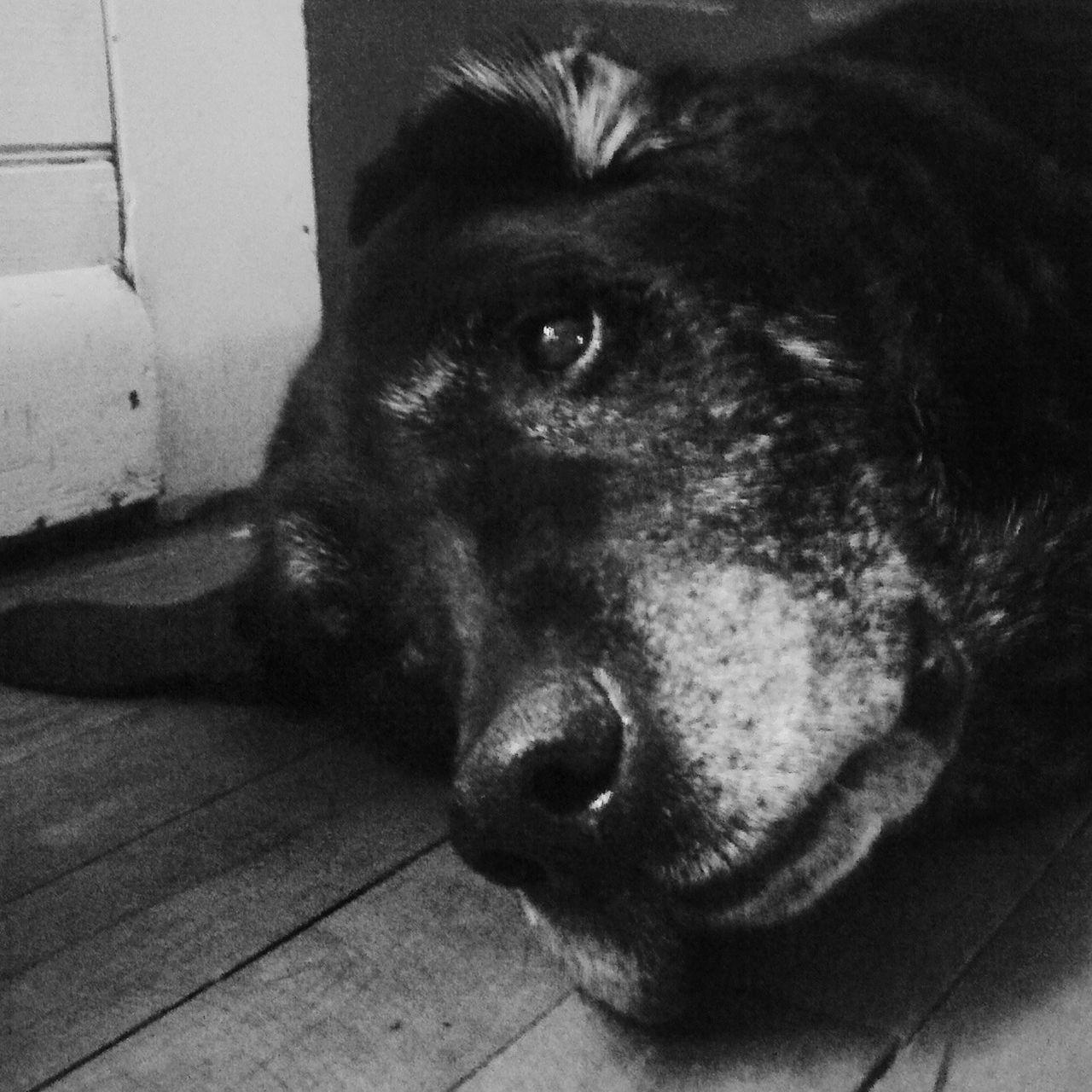 Priceless Pets Corner Dog Dogs Dogstagram I Love My Dog Dog Love Dog❤ My Dog DogLove