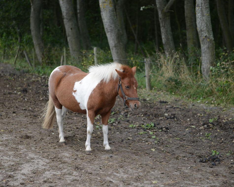Beautiful stock photos of pony, Animal Themes, Day, Domestic Animals, Livestock