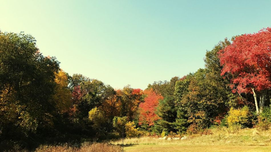 Autumn in New England Tree Growth Nature Clear Sky Beauty In Nature Change Scenics Tranquility Autumn Outdoors Green Color Sky