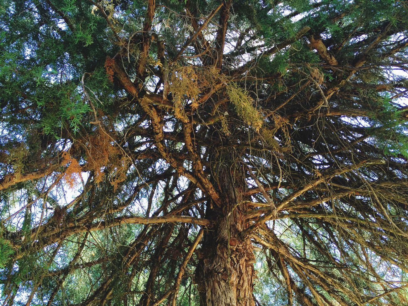 Nature Guisando Nature's Diversities