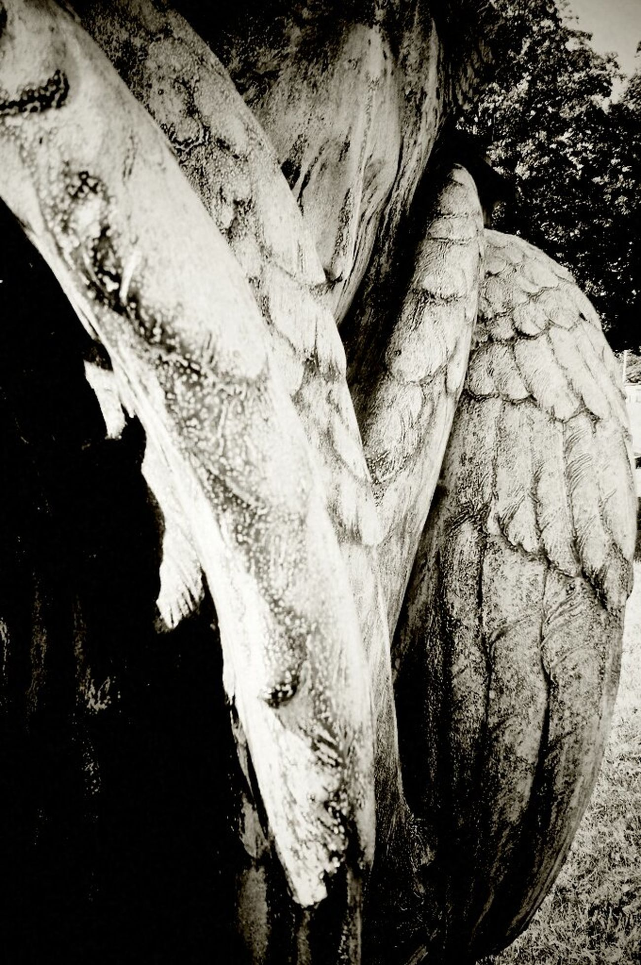 Angel Beauty In Nature Blackandwhite Cemetery Cemetery Photography Cemetery_shots Close-up Day Detail Graveyard Graveyard Beauty Nature No People Outdoors