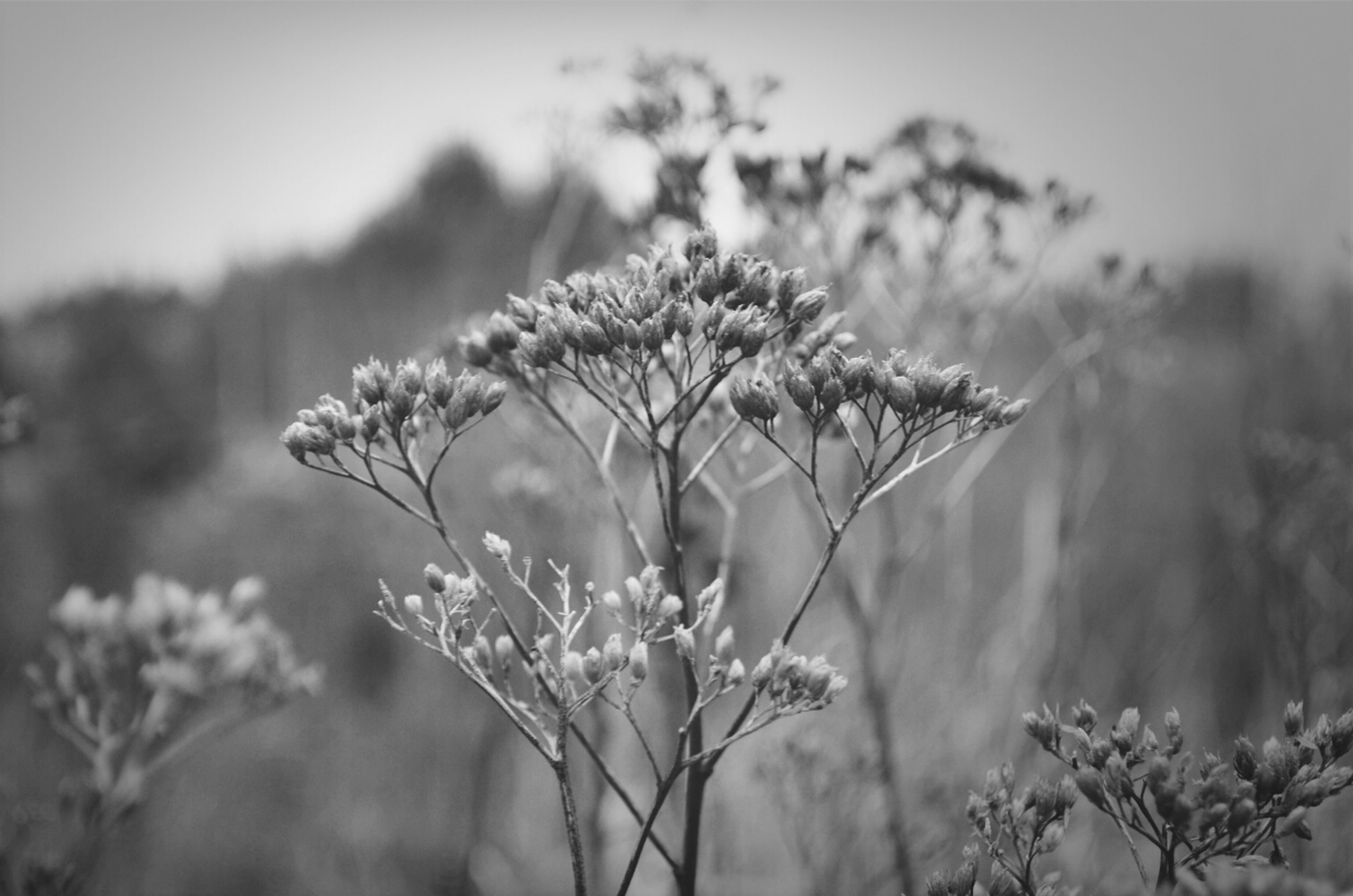 growth, focus on foreground, flower, plant, close-up, stem, nature, fragility, freshness, beauty in nature, selective focus, field, tranquility, growing, clear sky, outdoors, sky, day, botany, bud