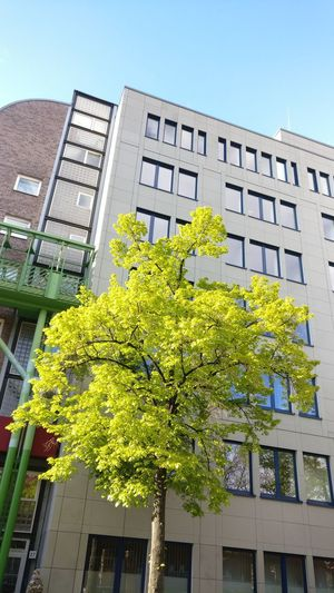 Tree Green Nature Urban City