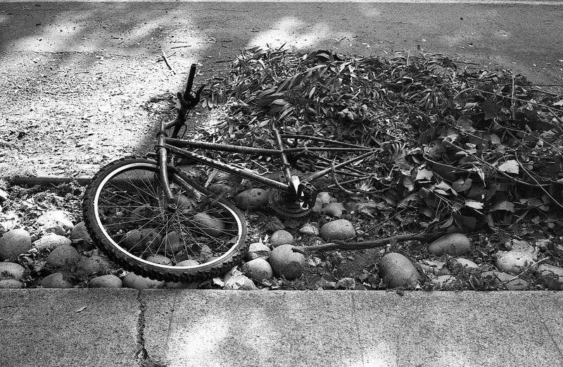 Green Waste. 35mm Blackandwhite Film Photography Believeinfilm Shootfilm Filmisnotdead 35mmfilm Staystokedshootfilm Monochrome Canonetql17giii Canonet Canon Siliconvalley Bike Streetpan Jchsp400 Willowglen Willowglenthings