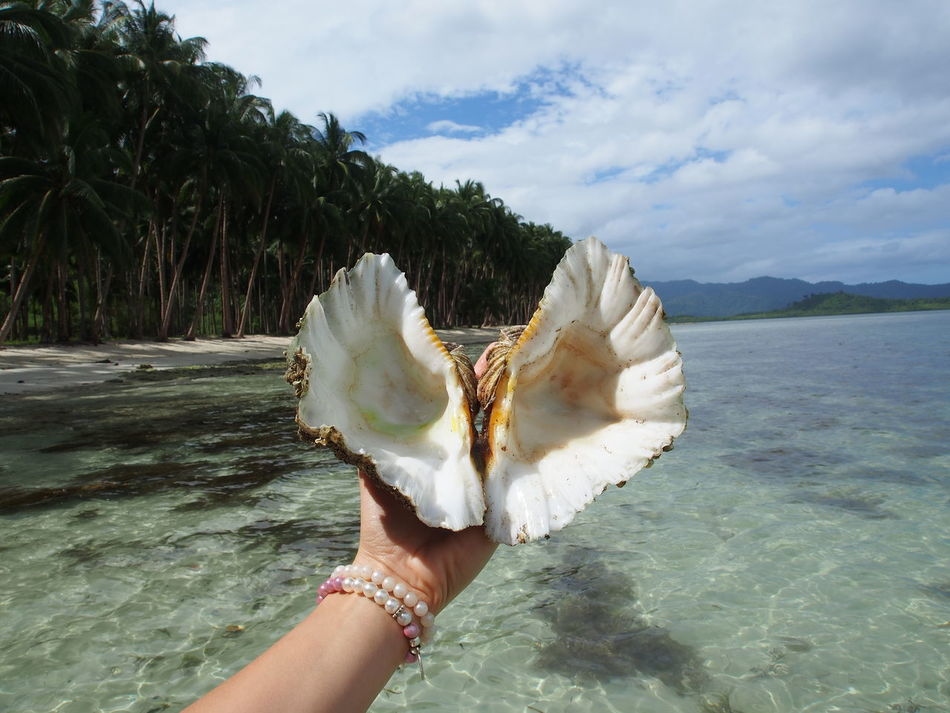 Beach Beachday Beautiful Nature Calmbeach Coral Coral Reef Corals Corals Out Of Water Exploring Nature Holding Holiday Human Hand Nature Outdoors Philippines Seashell Seashells Snorkeling Snorkelling Summer Summertime Topdestinations Traveling Vacation Vacation Destination