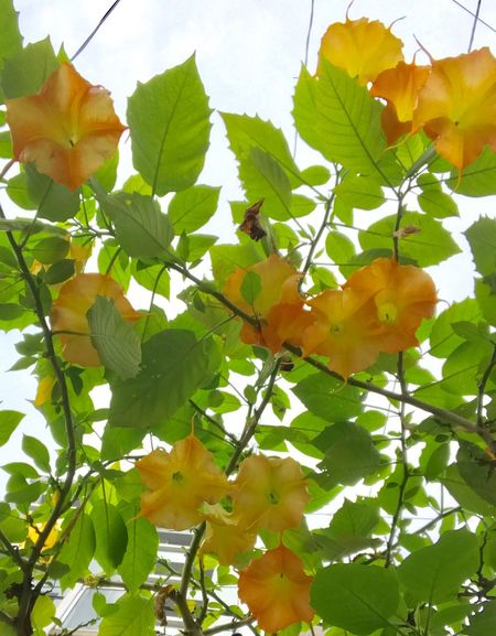 Nature Leaf Growth Freshness Green Color Day Flower Beauty In Nature Yellow