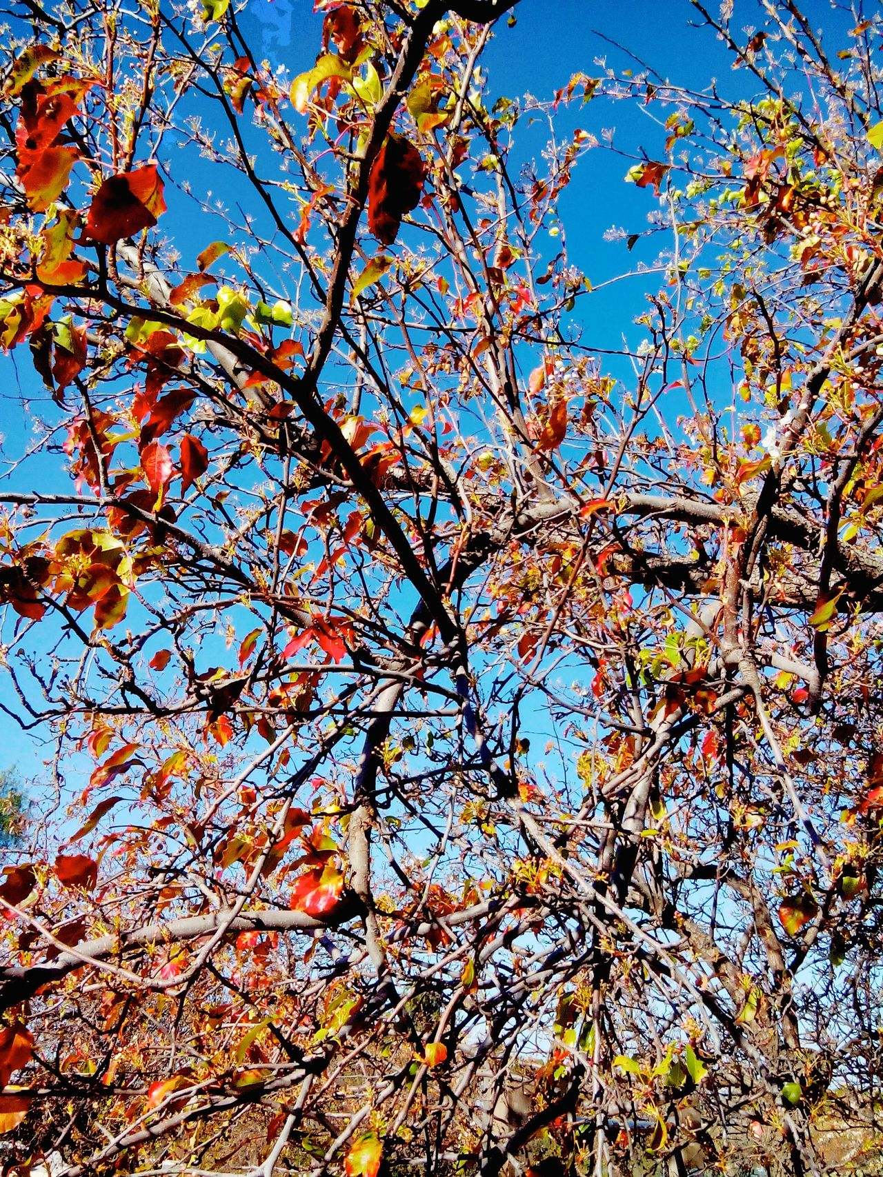 Autumn🍁🍁🍁 Beauty In Nature Branch Branches Branches And Leaves Clear Sky Day Daylight Freshness Growth Low Angle View Nature Nature Photography No People 😇😇😇 Outdoors Tree