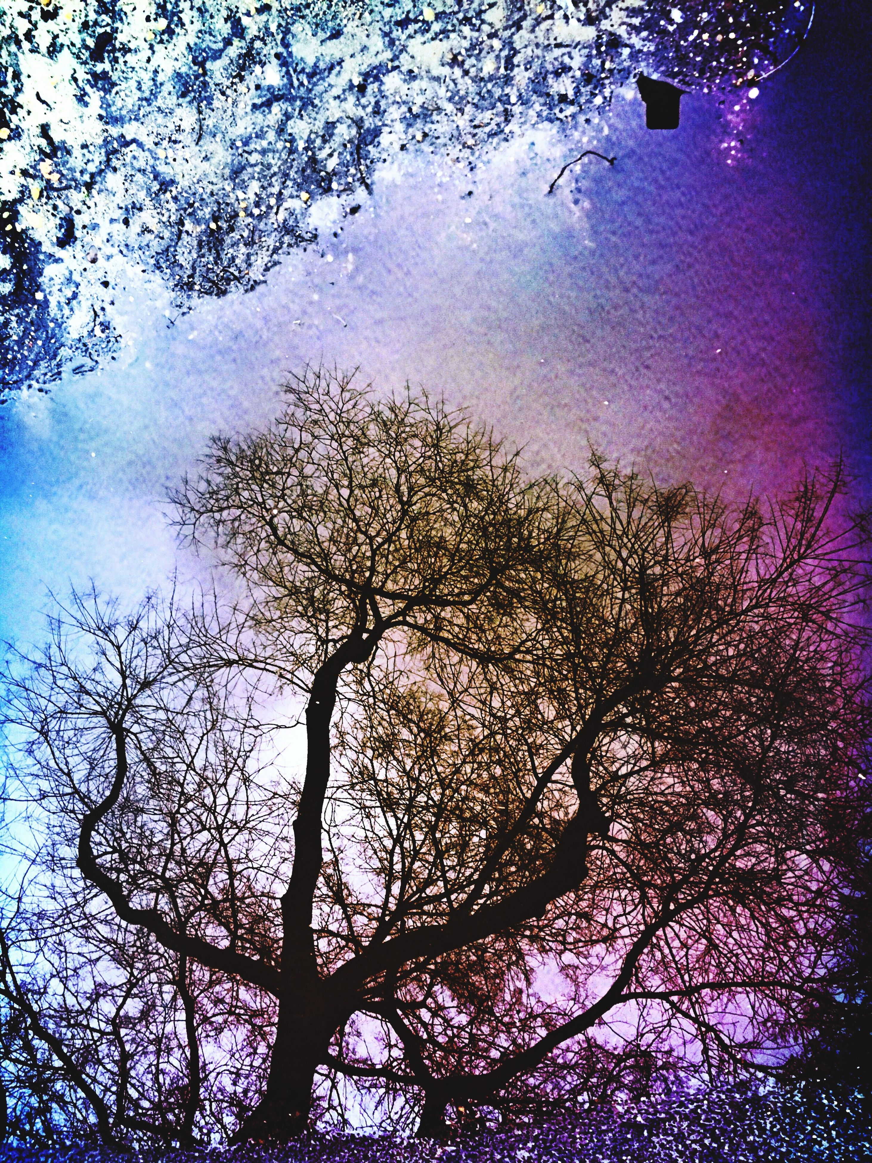 tree, branch, low angle view, nature, beauty in nature, sky, tranquility, bare tree, growth, blue, silhouette, scenics, night, no people, backgrounds, full frame, outdoors, water, tranquil scene, dusk