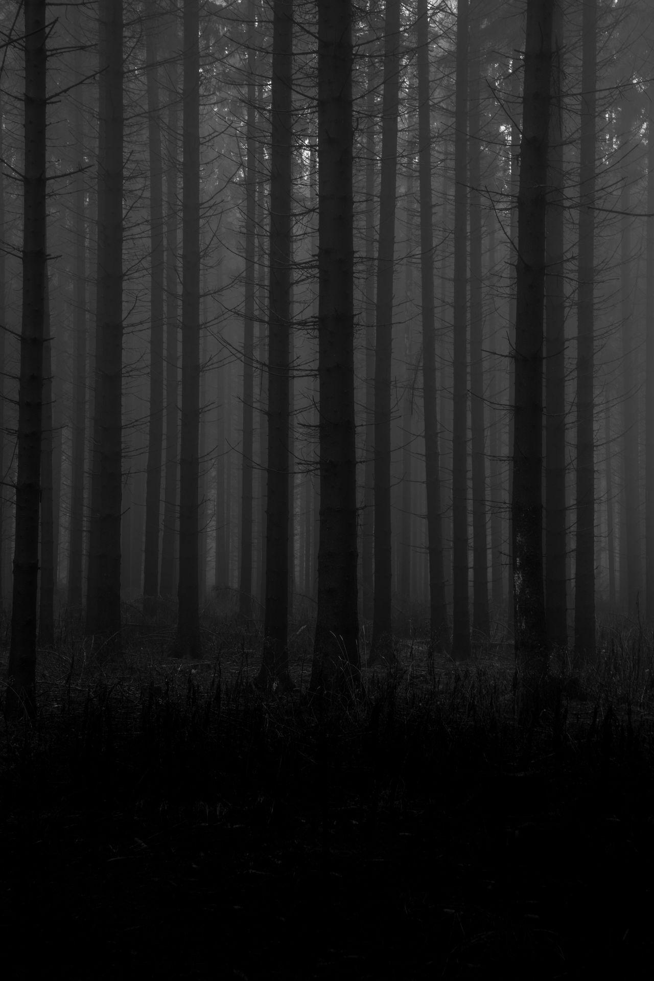 Lost. Forest Tree Nature WoodLand Tree Trunk Fog Woods No People Outdoors Day Creepy Dark Dark Photography Hungary Bükk Nationalpark Hungary Bükk Bükk National Park Magyarország Miskolc Misty Mist Nature_collection Naturelovers TreePorn Traveling