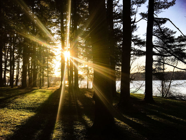 Beauty In Nature EyeEm Nature Lover Landscape_Collection Nature Nature_collection Sun Sunbeam Sunlight Sunset Tranquil Scene Tranquility Tree The Great Outdoors - 2016 EyeEm Awards The Great Outdoors With Adobe