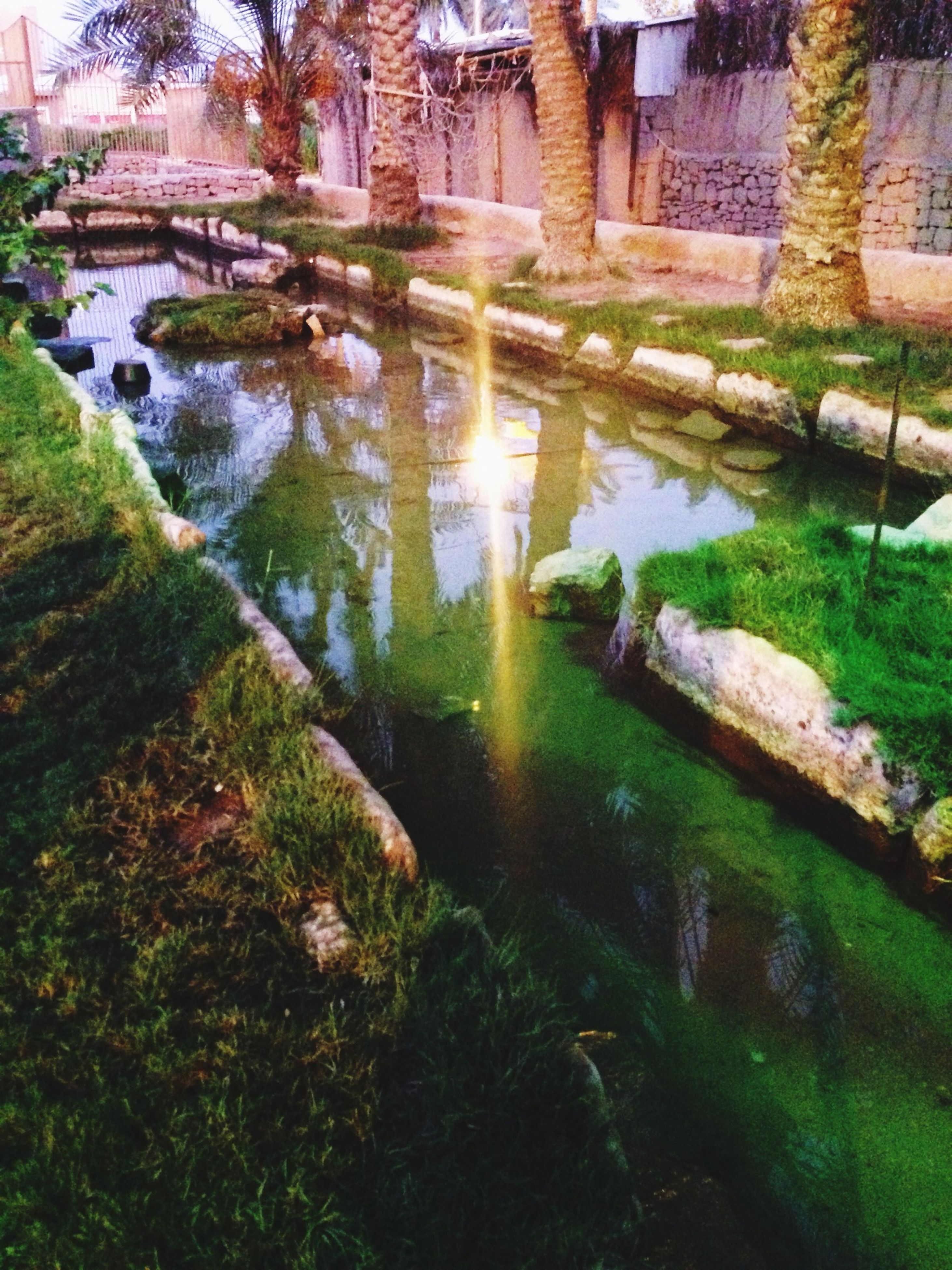 water, reflection, built structure, architecture, grass, pond, building exterior, tree, nature, green color, canal, high angle view, plant, sunlight, stream, tranquility, river, growth, outdoors, no people