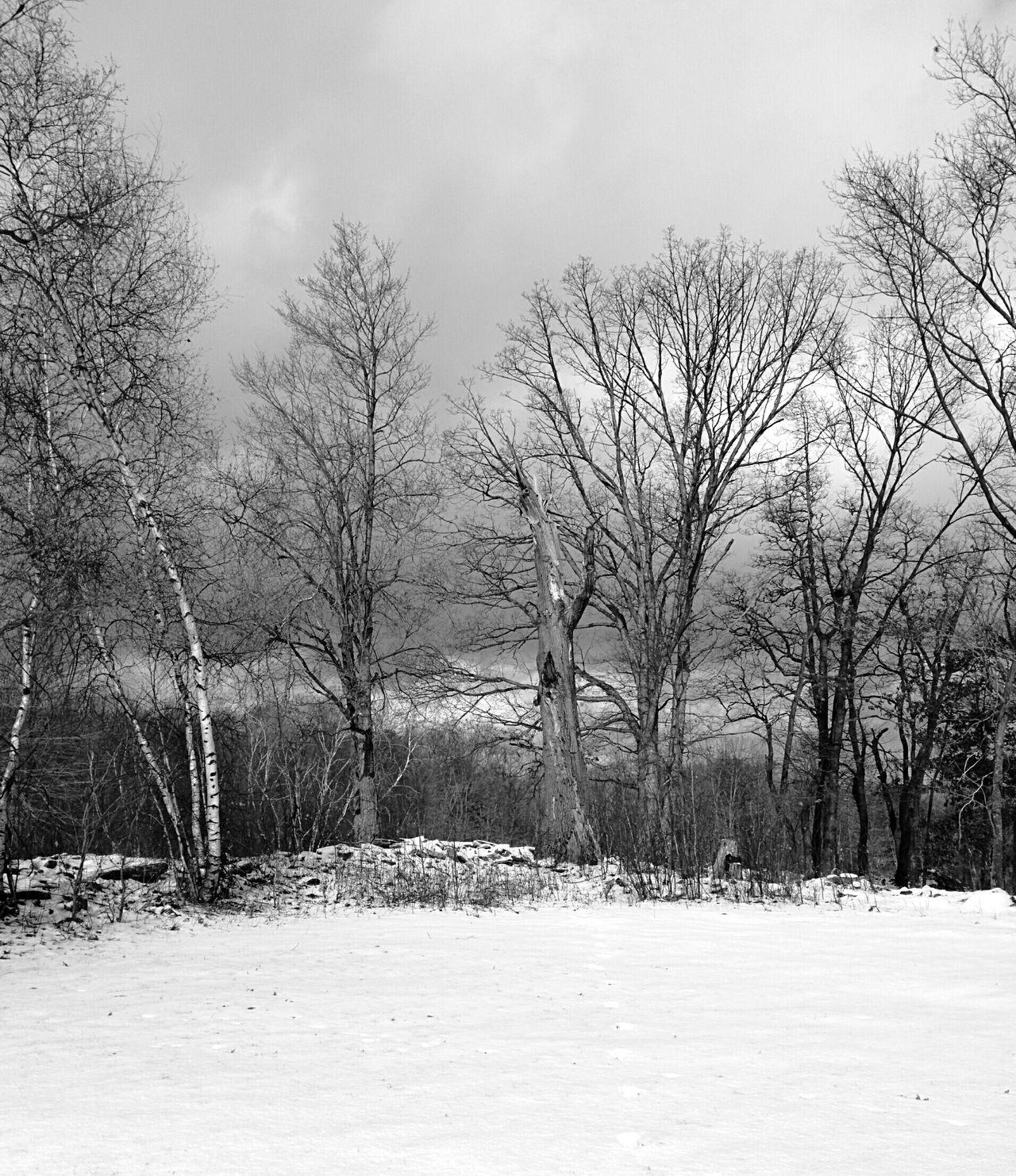 Winter Landscape Trees Dead Trees Snowy Ground