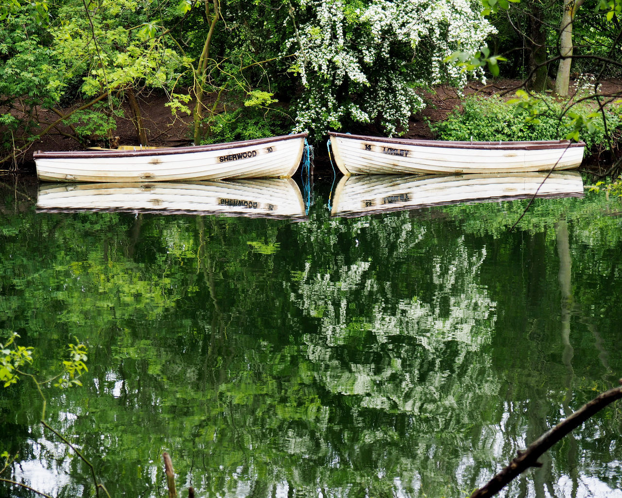 Beauty In Nature Boats Close-up Day Green Color Growth Nature No People Outdoors Plant Reflection Reflection Tree Water