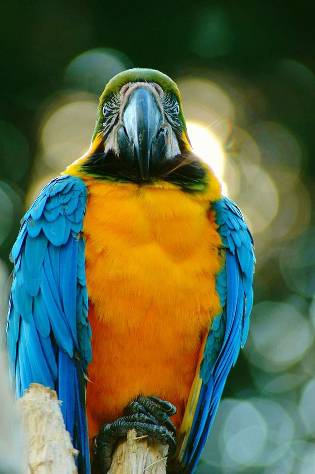 Austria Day Papagei Ara Animal Animal Themes Nature Naturelovers Nature_collection Bird Macaw Macaw Parrot