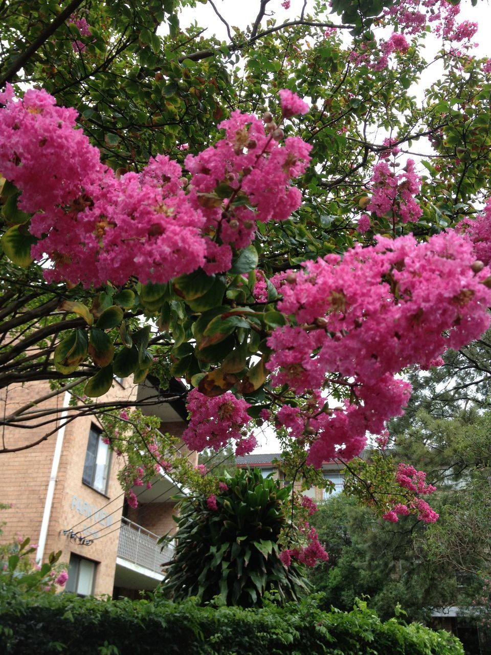 flower, growth, tree, pink color, no people, nature, beauty in nature, blooming, architecture, freshness, outdoors, day