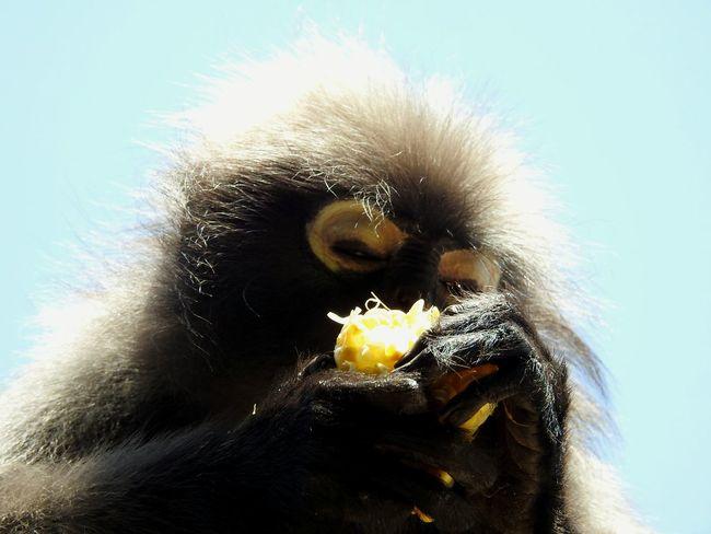 Nature Real Thailand EyeEmNewHere PrachuapKhiriKhan Sommergefühle EyeEm Selects Beachphotography Sunny Day 🌞 The Gulf Of Siam Wild Animal Magic Place ☀️ Naturephotography Let's Go. Together. Ao Manao Thailand Summertime Monkeys Summer ☀ Holiday Bay
