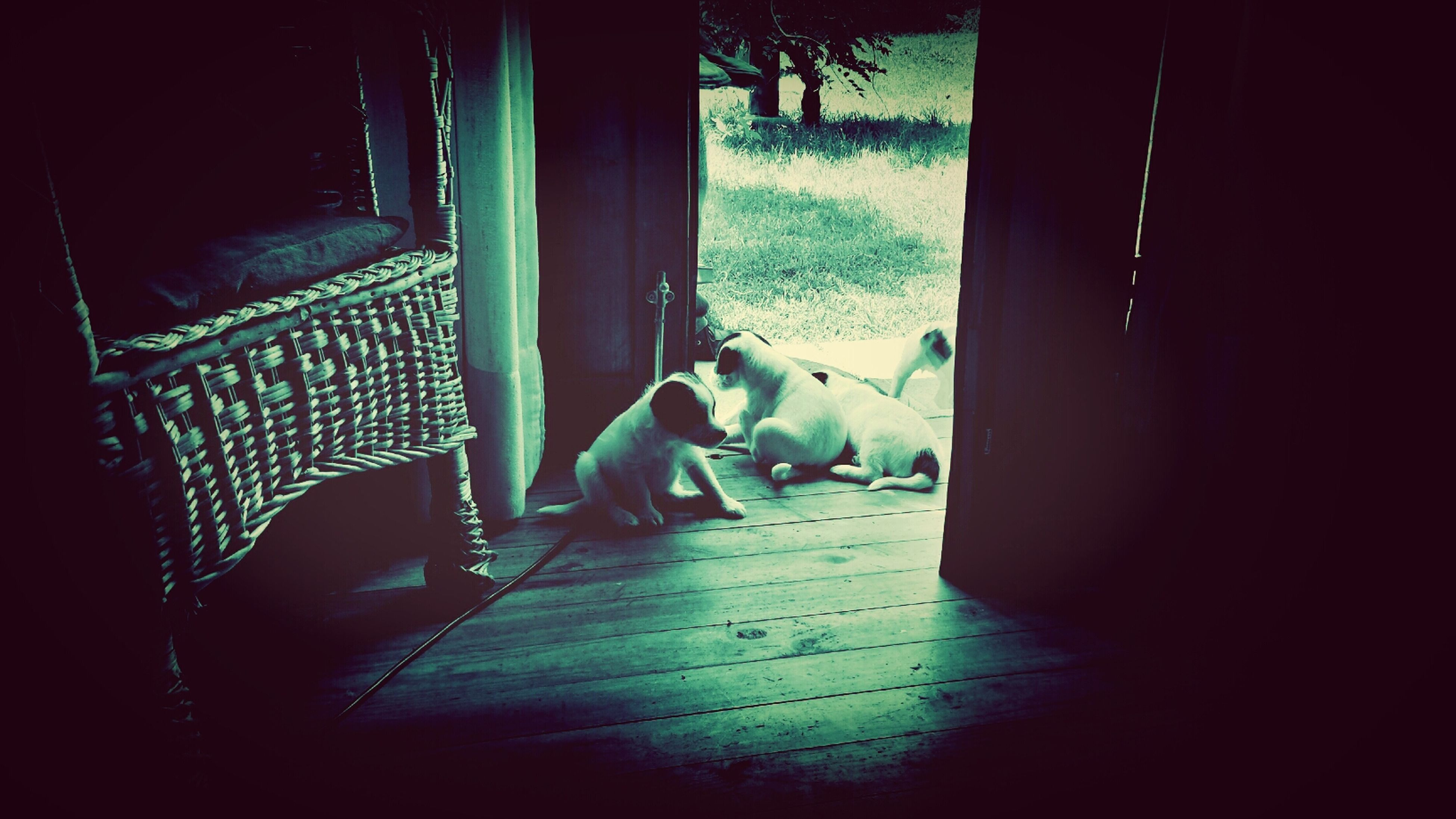 indoors, window, pets, domestic animals, home interior, domestic cat, mammal, door, curtain, sunlight, one animal, house, relaxation, animal themes, cat, wood - material, day, bed, no people, dog