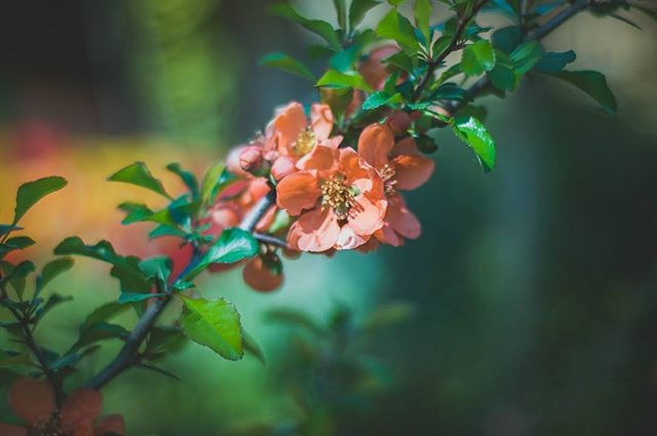 growth, flower, leaf, branch, freshness, focus on foreground, beauty in nature, nature, fragility, close-up, tree, plant, petal, twig, orange color, blossom, selective focus, outdoors, no people, day