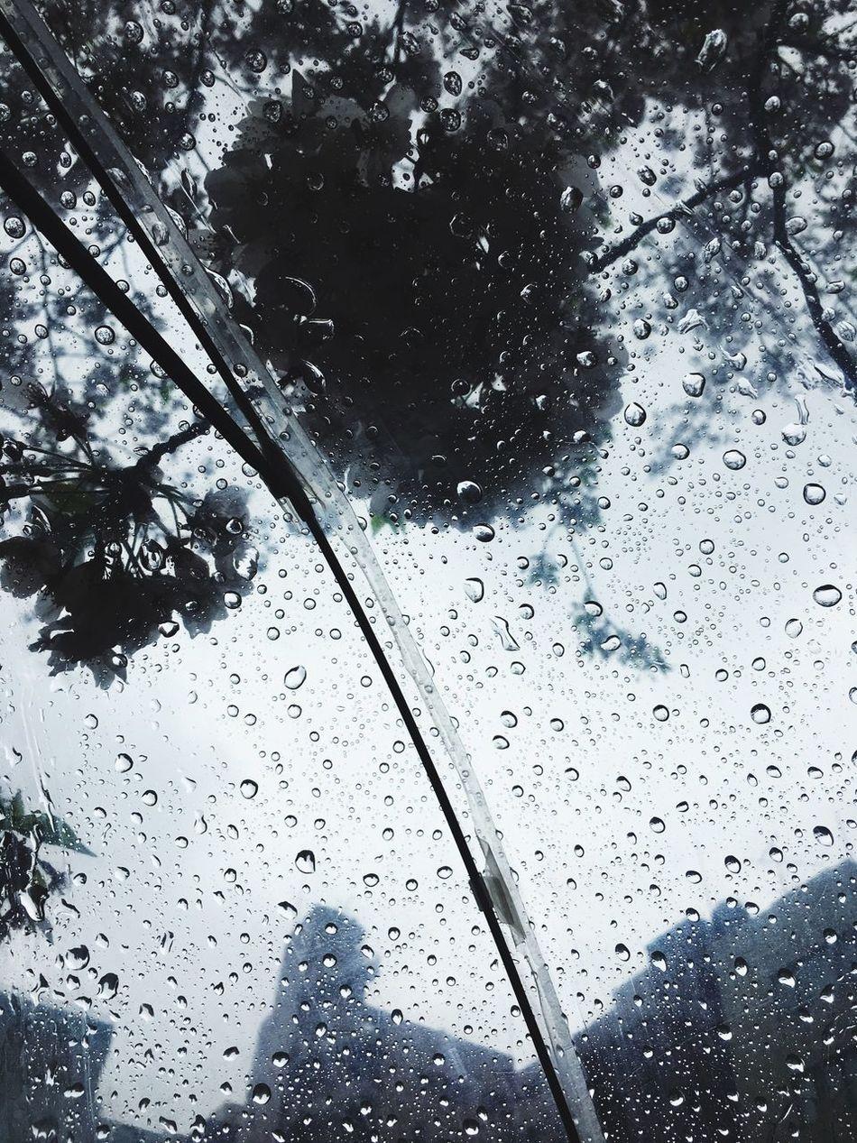 Rain Drop RainDrop Rainy Rainy Days Umbrella