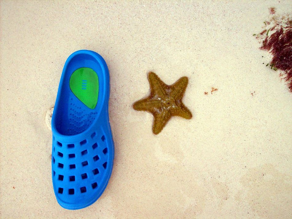 Animal Themes Beach Beached Blue Break The Mold Close-up Day No People Outdoors Sand Sandal Starfish  Starfish At Beach