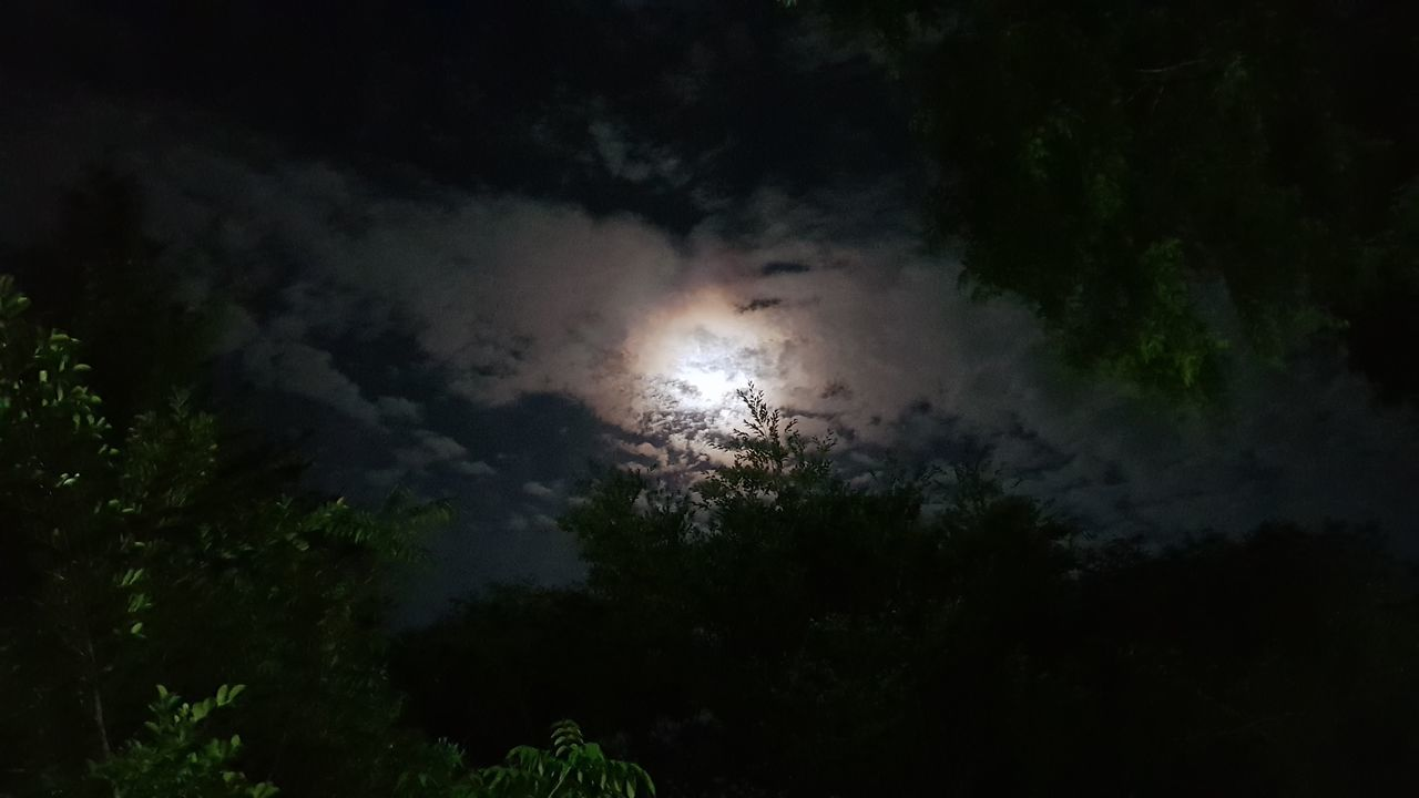 low angle view, nature, beauty in nature, night, sky, tree, no people, outdoors, scenics, silhouette, tranquility, cloud - sky, growth