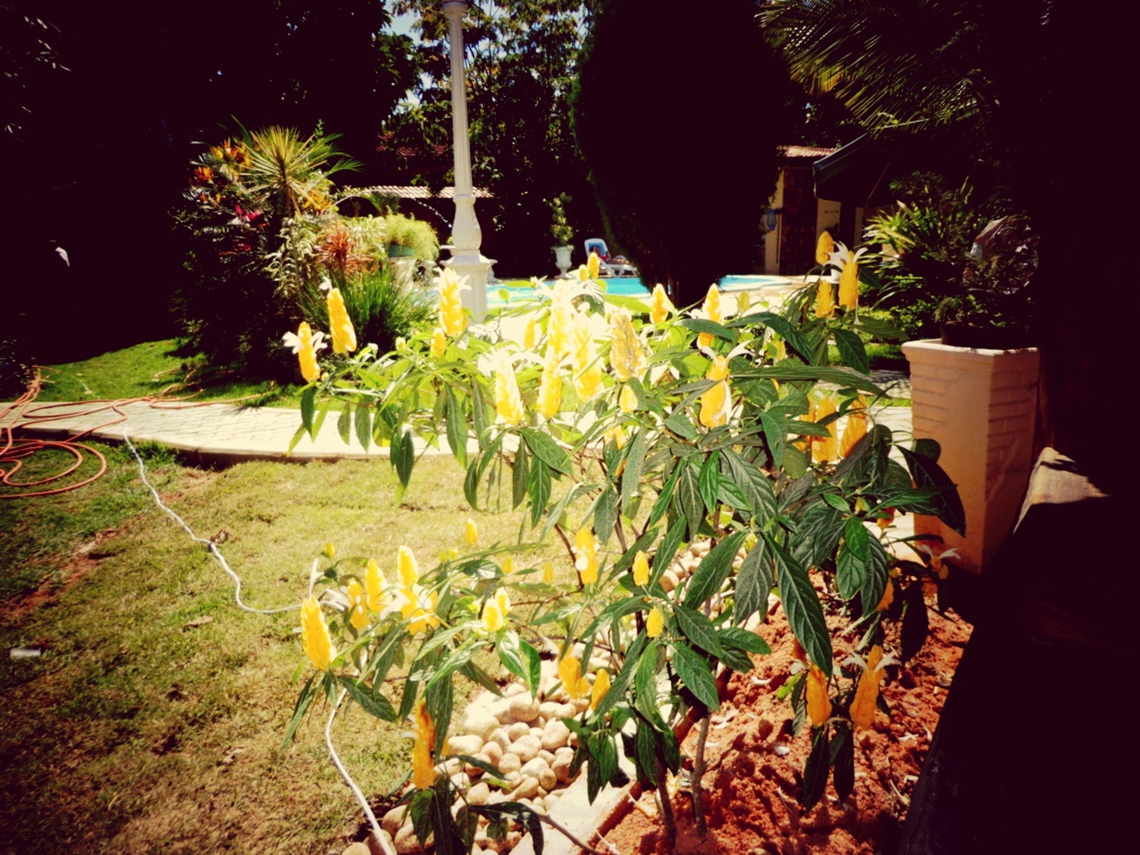 EyeEm Nature Lover Sun Peace ✌