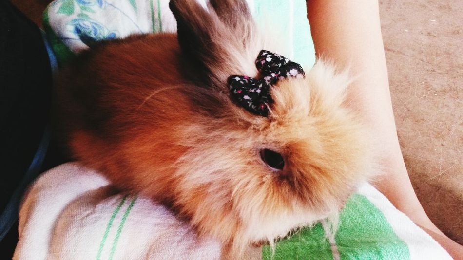Made this cutie actually look like a girl Bow. Lion Bunny