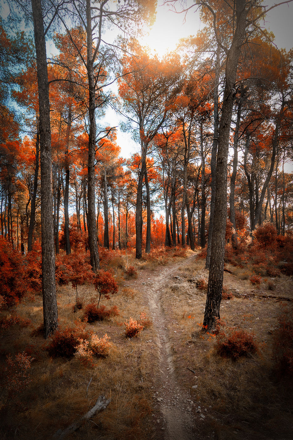 Beauty In Nature Forest Landscape Nature No People Parnitha Sun Flares Tree