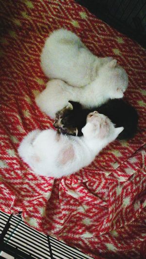 Liltle kitten.. 😘 Pets Domestic Cat Indoors