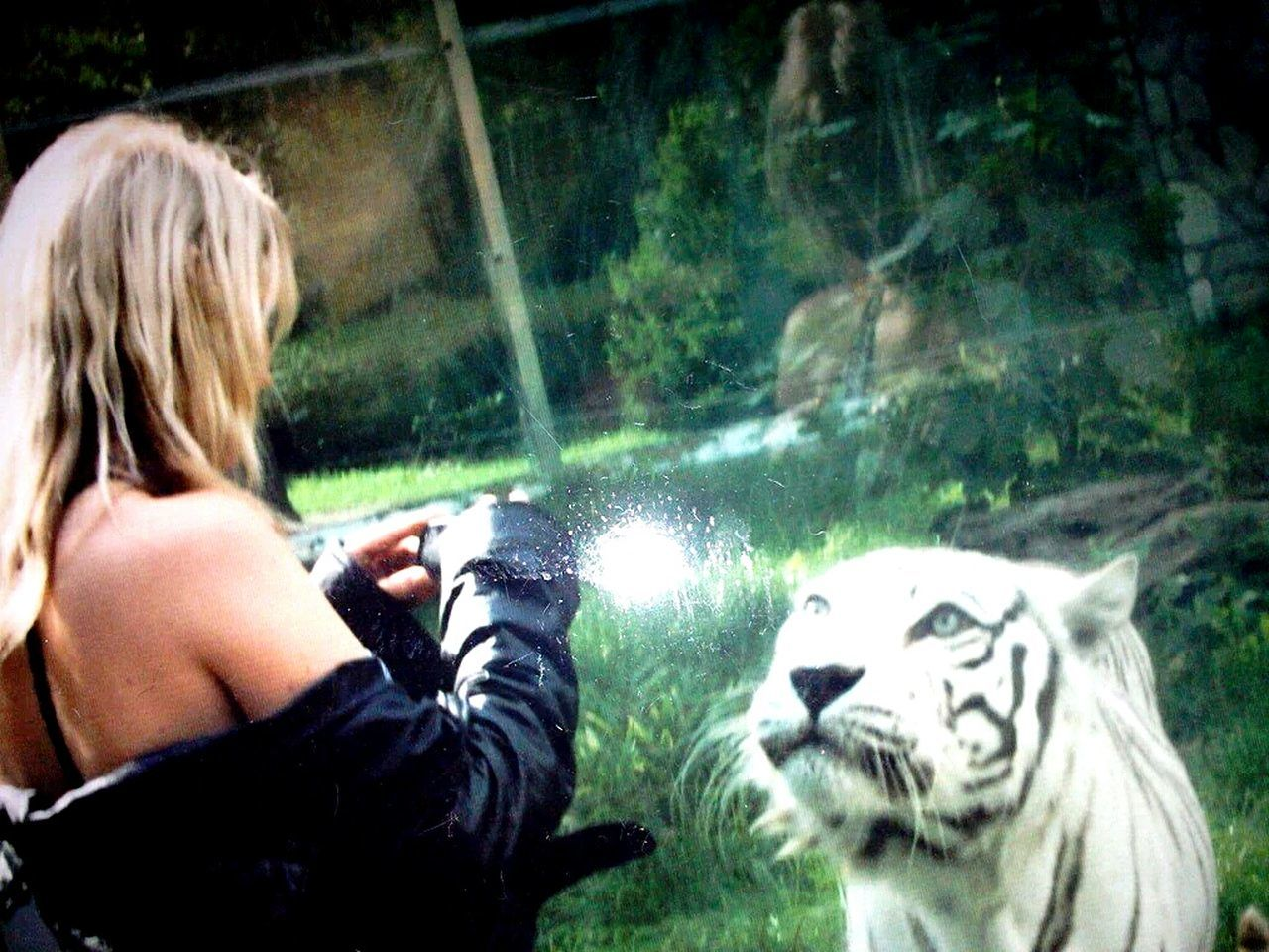 animal themes, one animal, real people, leisure activity, one person, mammal, day, animals in the wild, animal wildlife, pets, outdoors, tiger, water, domestic animals, young adult, people