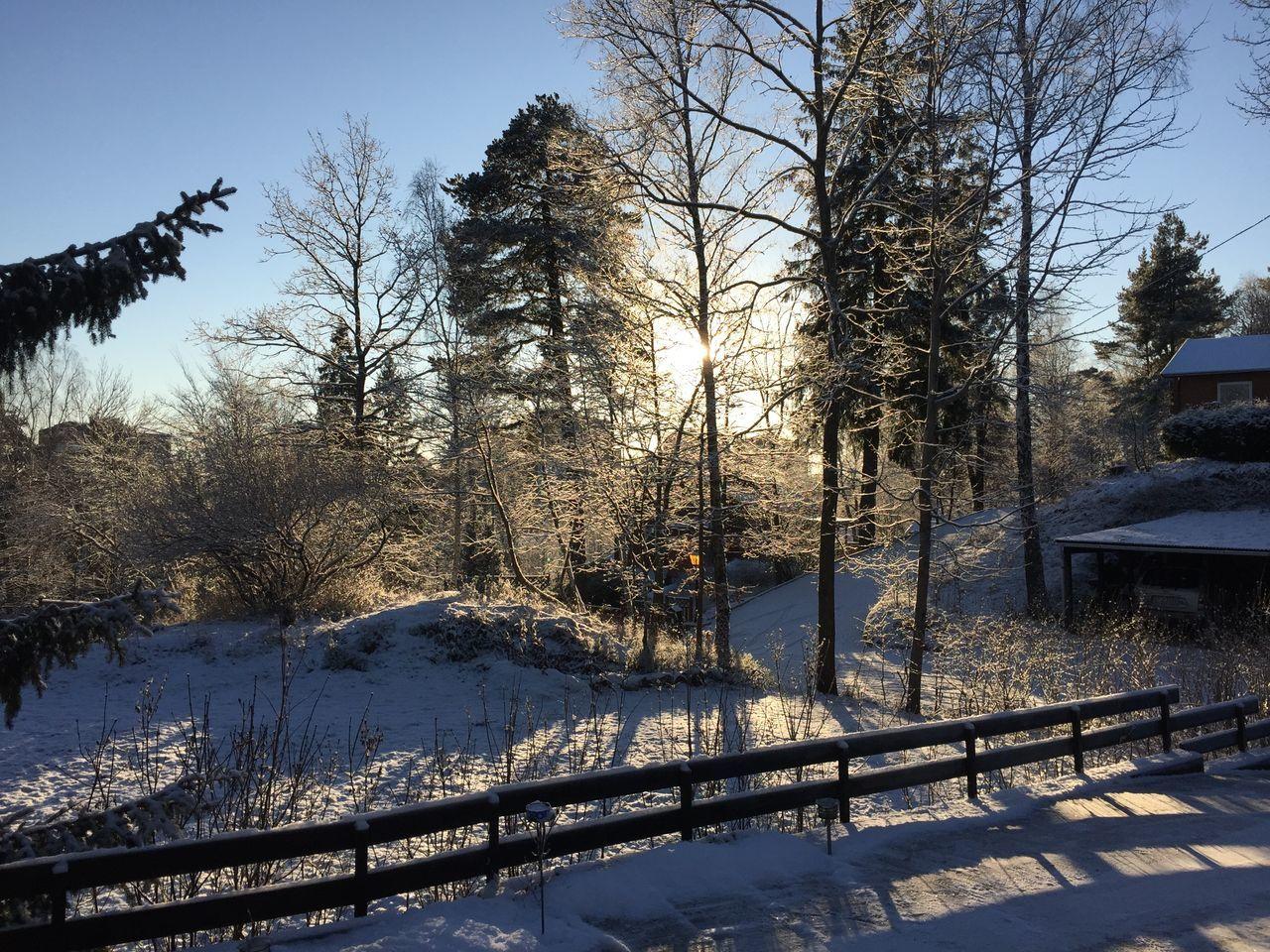 Sunny Winter Wintertime Snow