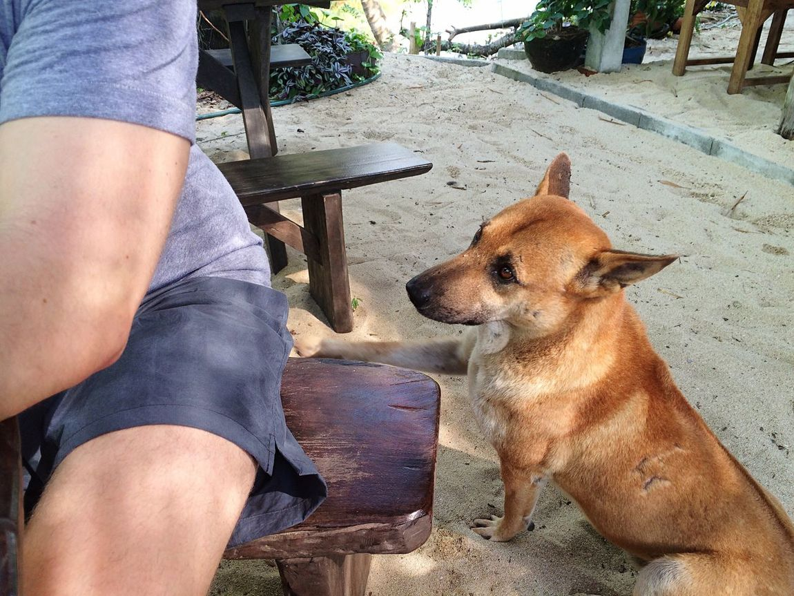 Adventure Buddies Beach Man Male Traveling Holidays Restaurant Holiday Close-up Closeup Backpacking Dog Q Von Audi Spotted In Thailand Koh Chang