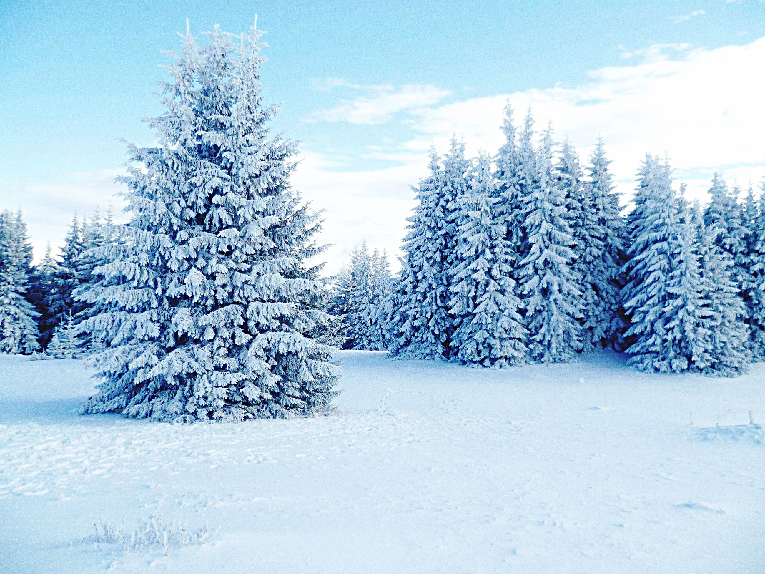 snow, winter, cold temperature, tree, blue, nature, frozen, no people, christmas tree, tranquil scene, christmas, scenics, tranquility, outdoors, day, landscape, snowing, beauty in nature, sky