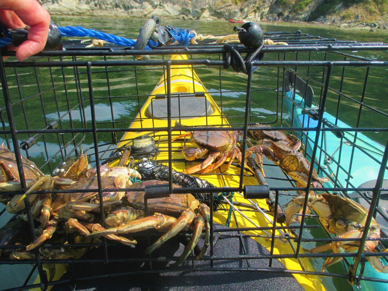 Bellingham, Washington Catching Crabs Crabbing Dungeness Crab Kayak Crabbing Kayak Fishing Leisure Activity Lifestyles Outdoors Unrecognizable Person