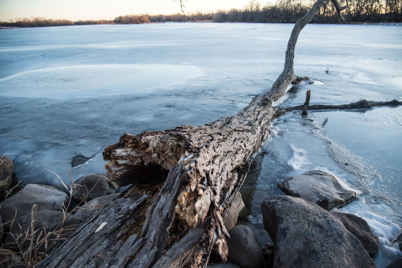 View of dead fallen tree laying in frozen lake in woods at sunset - wide angle shot Bark Cold Cold Temperature Day Dead Tree Fallen Tree Forest Frozen Frozen Lake Horizontal Ice Lake Landscape Laying Nature No People Outdoors Perspective Rocks And Water Snow Sunset Water Wide Angle Winter