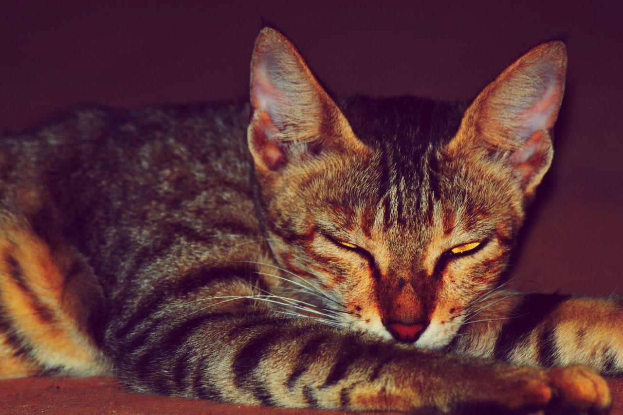 Sleepy Don't Disturb Don't Disturb Me