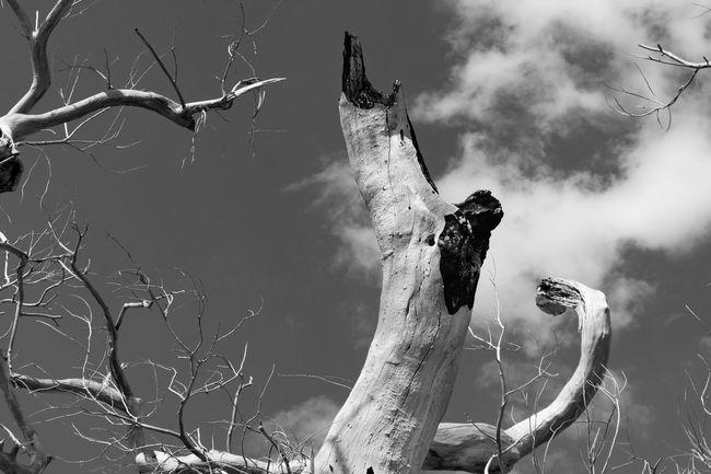 Pointing at something in the sky. Cottonwood TheNightmareBeforeChristmas Tucson Az Photography Thephotographer Blackandwhite Photography Dead Tree Something Beautiful LucyintheSkywithDimonds Walking Around