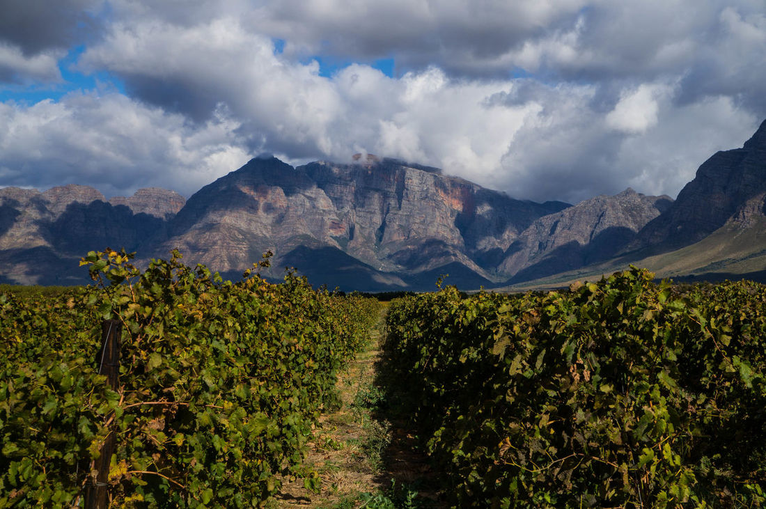 Beauty In Nature Cloud Cloud - Sky Cloudy Countryside Day Growth Idyllic Landscape Mountain Mountain Range Nature No People Non Urban Scene Non-urban Scene Outdoors Remote Scenics Sky Tranquil Scene Tranquility Valley Vines Vineyard Wine Farm