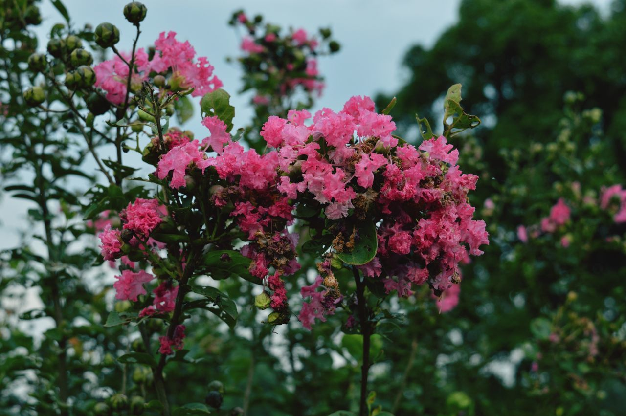 Flower Growth Nature Freshness Beauty In Nature Pink Color Plant No People Day Outdoors Flower Head