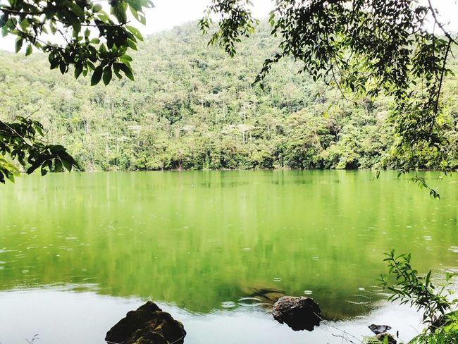 Eyeem Philippines City Escape Forest Tree Green Drizzle Bulusan Lake Lake Trip Silent Water Nature Photography