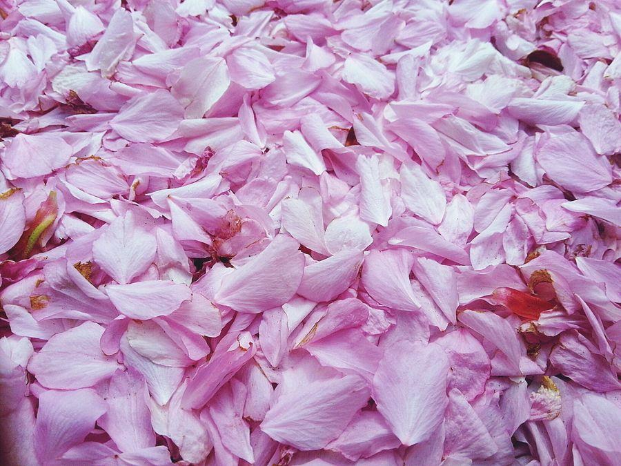 Fallen Blossom London Pantone Colors By GIZMON
