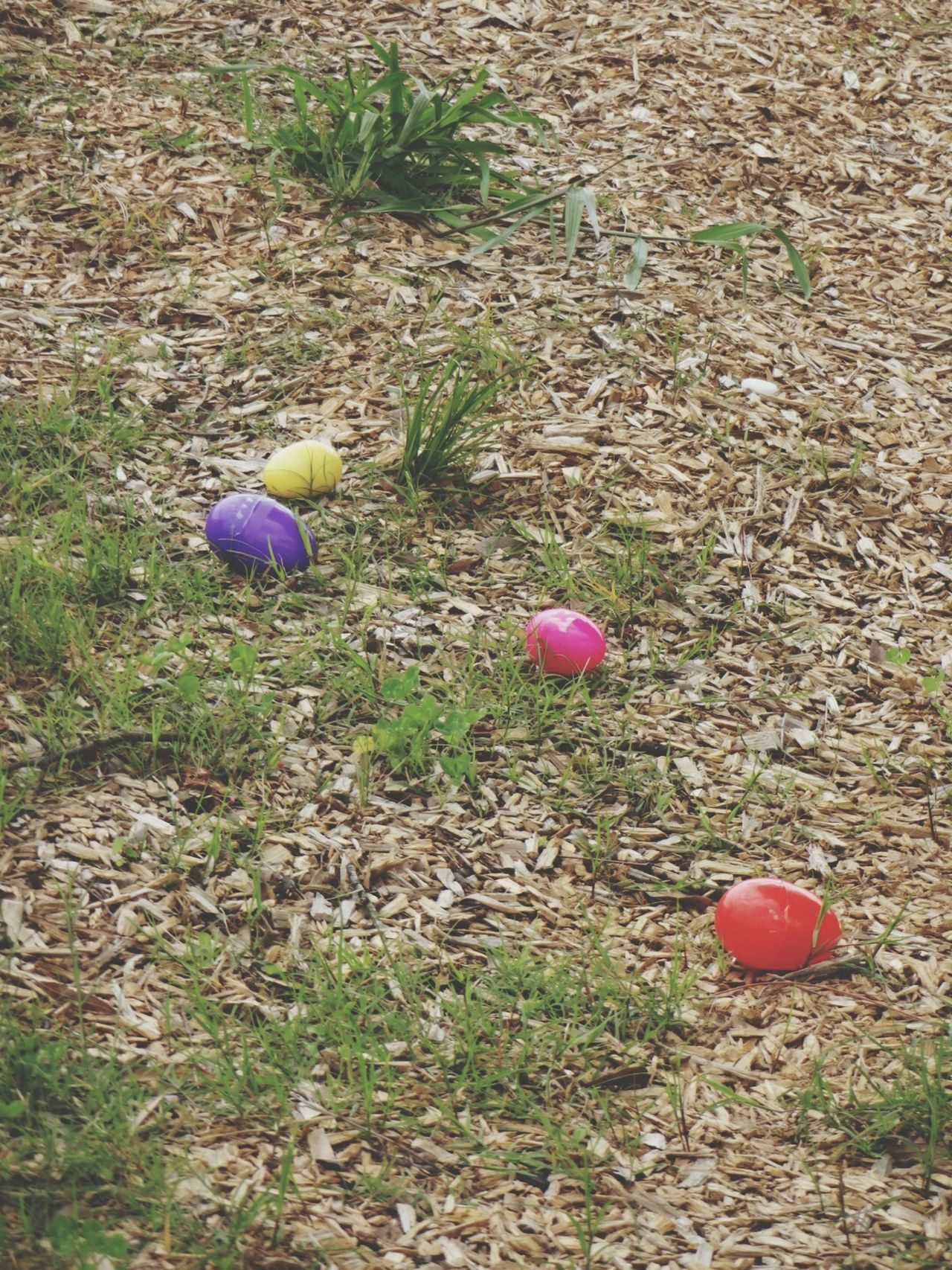 Easter Ready Easter Egg Hunt Plastic Eggs Colorful Surprise! Colored Eggs Grass Backgrounds Taking Photos Android Photography