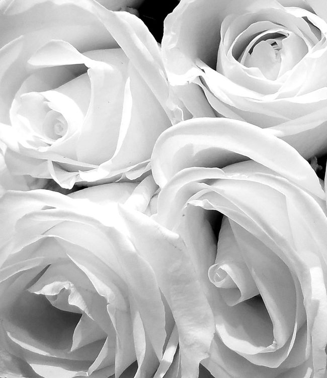 WHITE Color Palette The Song Of Light Flowers Nature MUR B&W Monochrome Photography