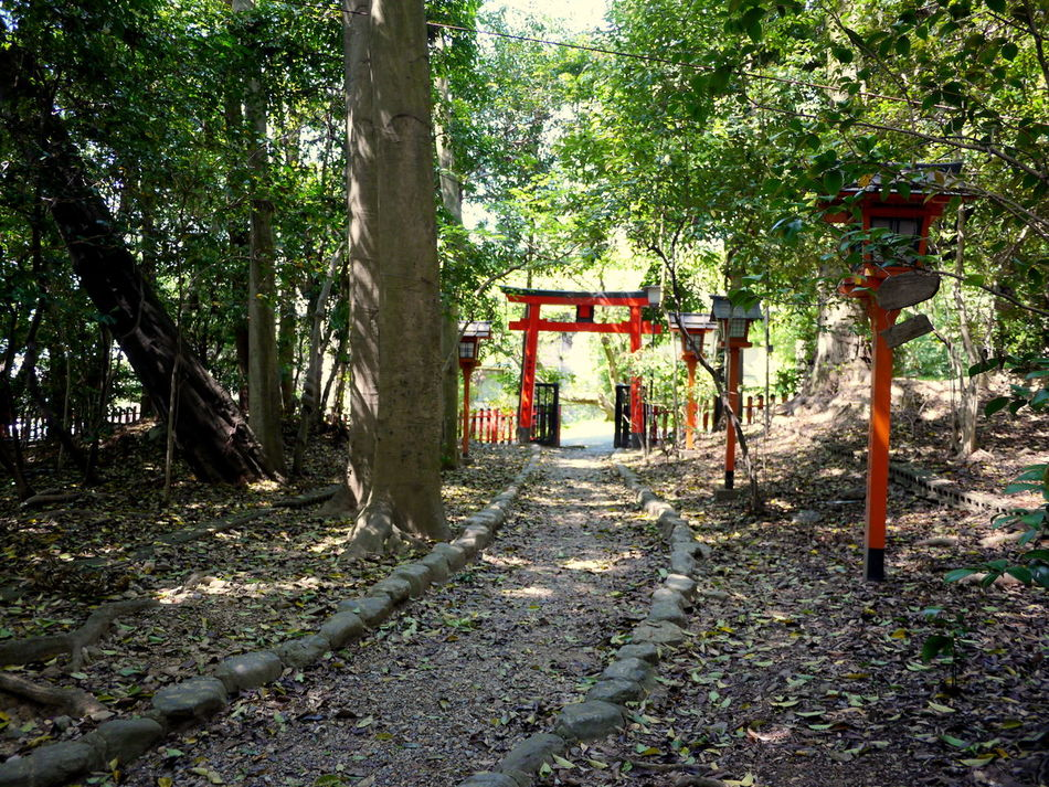 Forest Gate Green Color Japanese Shrinr Leaf Litter No People Path Red Torii Red Wooden Lanterns The Way Forward Tranquil Scene Trees Walkway