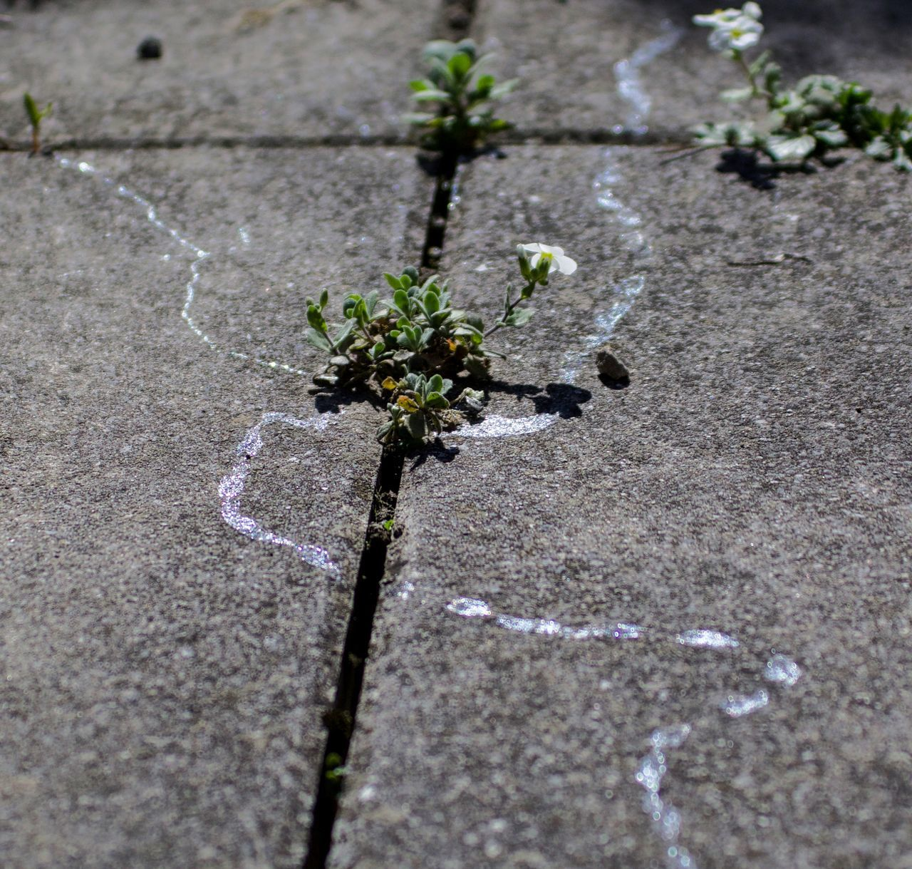 Spring Impressions Beauty In Nature Close-up Day Flower Nature No People Outdoors Plant Slime Slimy Trace Traces