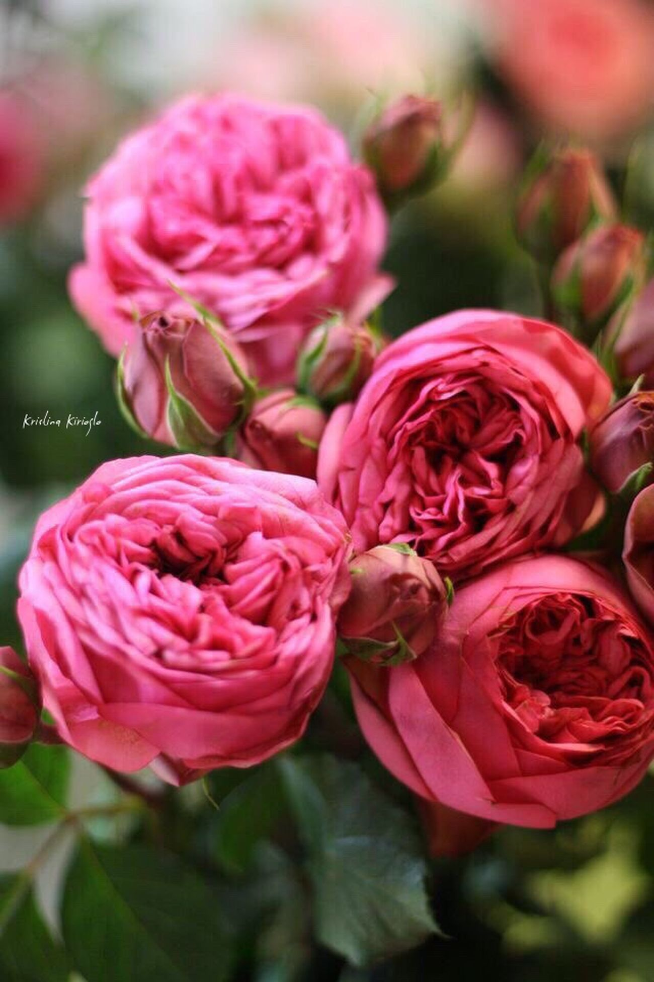 Такая у нас красота)) Shabby Rococo Beauty In Nature Rocuile Provence