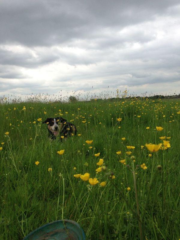 Fun in the fields Walking Around Enjoying The Sun Relaxing